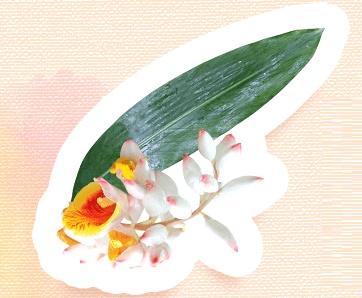 ビューティボタニカルの月桃葉